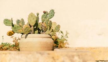 Weleda Kaktus Pflegeset