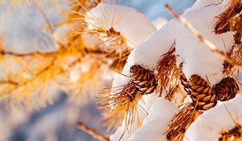 Natur in Saas-Fee im Herbst