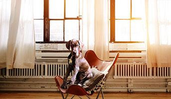 Hund in Sessel von einem Fenster