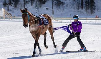 Pferd in St. Moritz